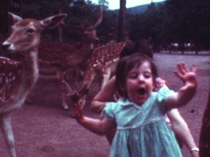 """[""""Fuck! A Deer!""""]"""